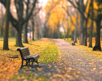 "Fall landscape, nature,  yellow golden trees, woodland, home decor wall art - ""Autumn Park"" 8 x 10  print"