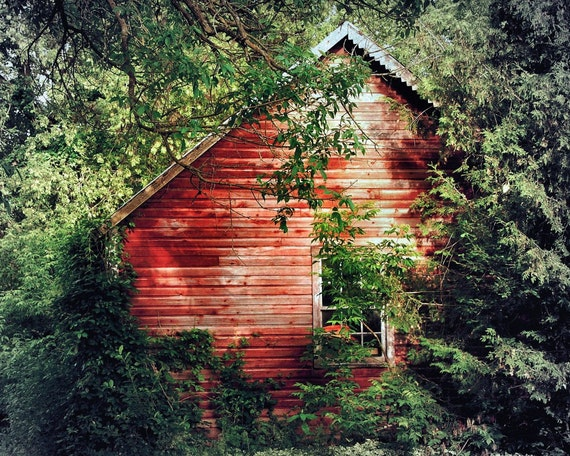 "Crimson abandoned cottage in the woods rustic forest trees woodland spring  -"" Red cabin"" 8 x 10"