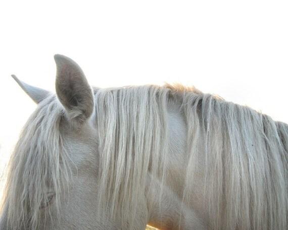 Horse photography pale grey animal photo summer white equine photography - 'White mane' 8 x 10