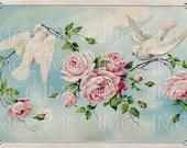 Digital Download Scan Vintage Postcard Pink Chic Roses Shabby White Doves Birds U Print