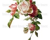 Large Vintage Chic Victorian Shabby Roses Digital Download Scan U Print ECS Item scn0006