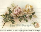 Shabby Pink Chic Roses Cream Yellow Roses early Marriage Certificate  LaRGE Digital Download Scan Print ECS GS0003