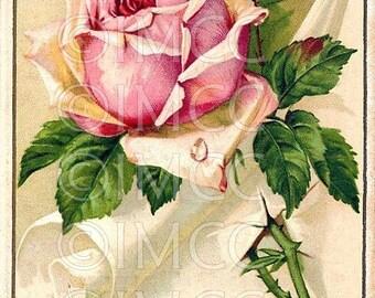 Digital Download Scan Chic Pink Shabby Rose Postcard ECS