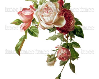 Large Vintage Chic Victorian Shabby Roses Digital Download Scan U Print ECS Item scn0006