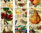 Botanical Fruits Butterflies Tags 2.5x3.5 Digital Collage Sheet Thanksgiving fall greeting cards postcard ATC ACEO UPrint 300jpg