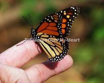 Fine art photograph Friendly Butterfly