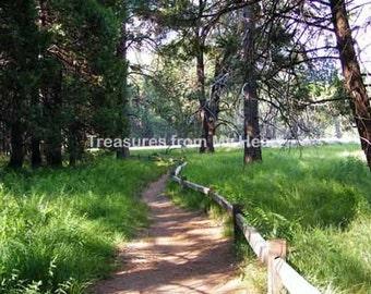 Fine art photograph Yosemite Path