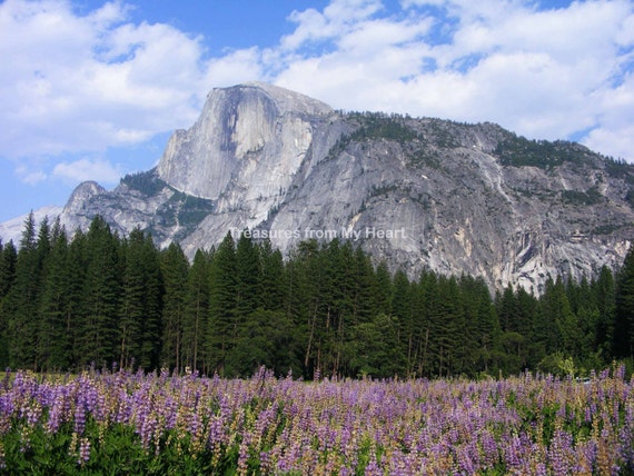 Fine art photograph Half Dome and Lupines