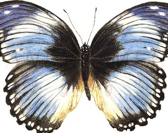 Blue Butterfly print-from original gouache painting