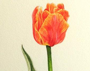 Botanical Tulip Print 2