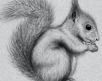 Squirrel and Acorn Black and White print