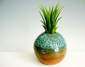 Air Plant Pod in Turquoise - Simply Modern and Minimalist Sculpture