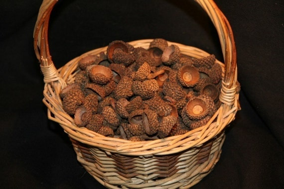 AC-8 50 Natural Acorn Caps (Acorn Tops), Perfect For Rustic Fall Crafts, Waldorf Doll Making, Autumn Wedding Table Decorations, Really Knobby