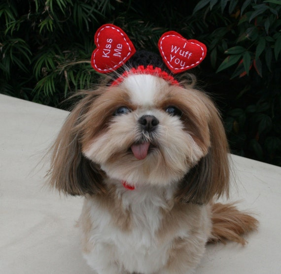 FLOATING HEARTS - WEDDING or Valentine Dog hat - Humorous - 2 to 20 lb pets-made to order