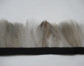 12 PCS NATURAL Mallard Duck Flank Feathers