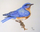 Bluebird of happiness Original watercolor painting