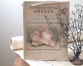 vintage book of shells. first edition