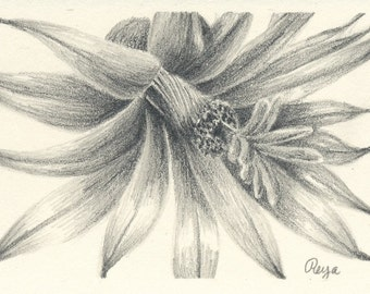 Little Cactus Flower Pencil Drawing Print ACEO