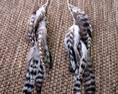 Feather Earrings - Long, Black and White Striped Feathers - Wild Wings