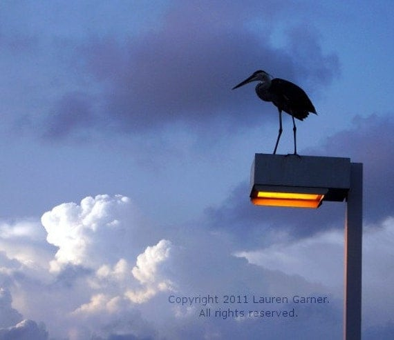 Lighten Up - Bird Sky Clouds Photography Blue Yellow White Orange Black Metallic Print Fine Art Wall Hanging - 8x10 Photograph