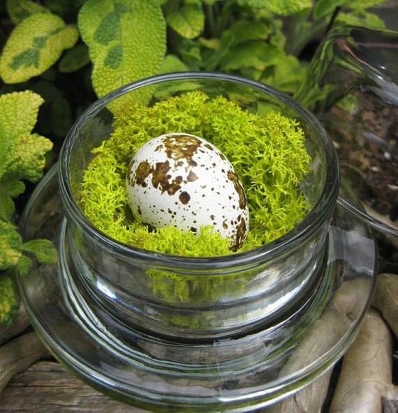 Spring Decor Moss Bird Nest Tiny Bell Jar Quail Egg Mini Cloche