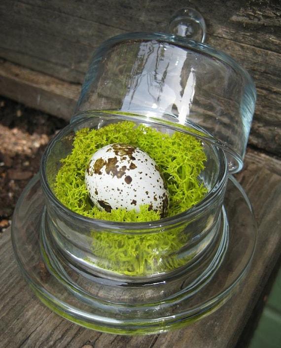 Bell Jar Quail Egg Mini Cloche Reindeer Moss Bird Nest