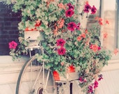 Bicycle Garden 4x6 Print, Shabby Chic Photograph, Pastel Color, Spring Flowers, Soft Pink, Vintage Bike Photo
