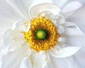 Flower Photograph, Sunny Day 5x5 Print, Nature Photography, Macro Flower Photo, Bright White, Yellow, Cheerful Home Decor