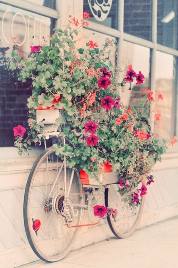 Still Life Photography, Bicycle Photo, Flowers, Summer Decor, Cottage Style, Pretty Wall Art, Pastel Colors