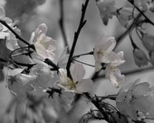 Photograph Delicate Dusty Light Pink and Gray Monochromatic Japanese Cherry Blossoms Flower Wall Art Feminine Home Decor