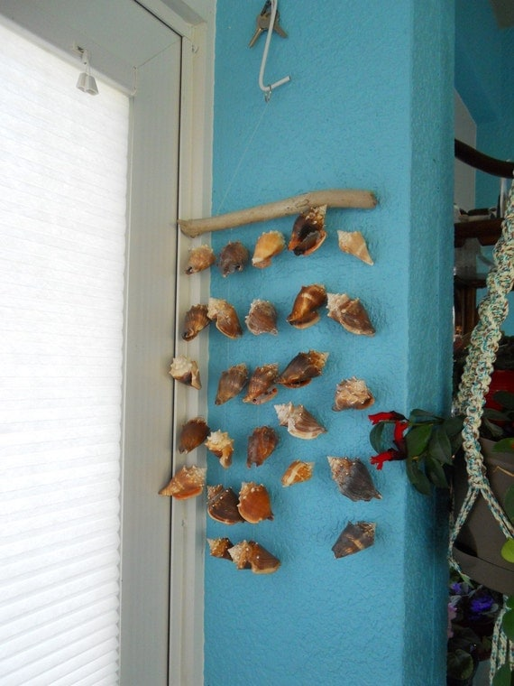 Wind Chime FIghting Conch Seashells Driftwood large