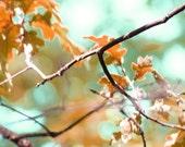 Autumn LIght-Original Fine Art Photograph by Artist J.Beaudet 8x10