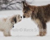 Say Hello Greeting Card-Proceeds to Animal Charity