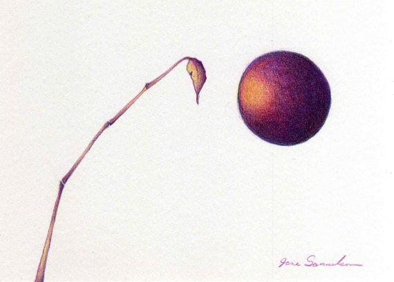One Stalk and the Moon - Stylized Nature Drawing - Purple Yellow