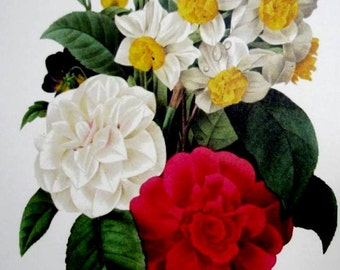 Vintage Redoute Botanical Art Print Spring Bouquet Camellias Narcisses Pansies Flowers No. 13