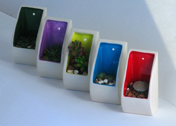 Wall Pocket - A Sweet Succulent Planter (comes with plant)