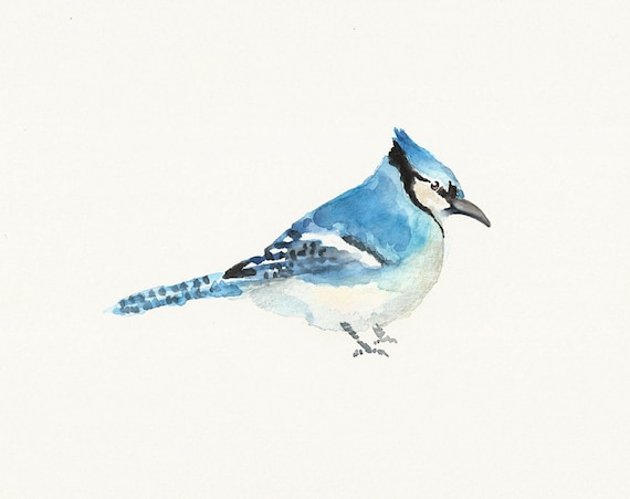 BLUE JAY by DIMDI Original watercolour painting 10X8inch