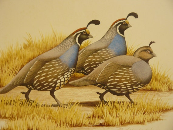 Artist R L Kothenbeutel  Signed Numbered Limited Edition Print CALIFORNIA QUAIL  Afternoon Stroll