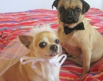 Bridal Party Pet BRIDE and GROOM costume - CUSTOMIZE bow tie with your wedding colors