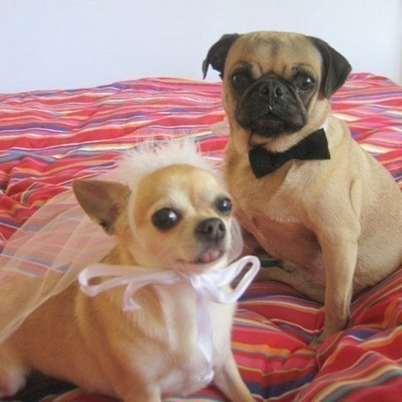 DOG costume - Pet BRIDE and GROOM costume - As featured in Etsys To have and to Hold Wedding Event