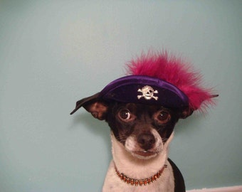 Pirate  hat for dogs and cats