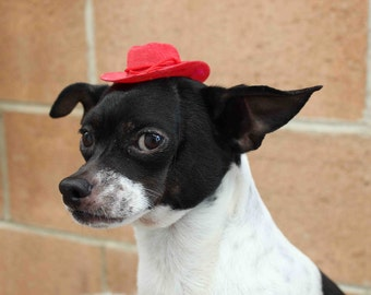 Cowboy mini  hat for dog or cat