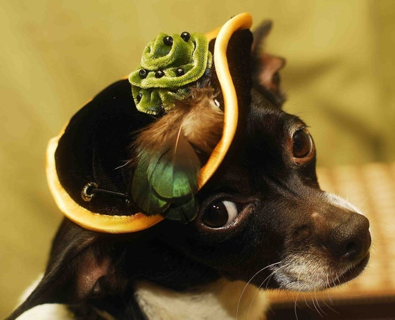 Hat with flower for elegant pet