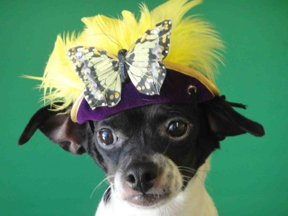 Hat for dog or cat with a  butterfly