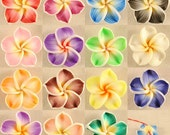 20 PCS Mixed Color Fimo Polymer Clay Plumeria Flower Beads 20mm