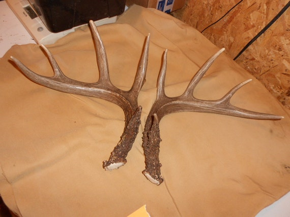 Lovely Matched Pair of Whitetail Deer Shed Antlers Lot No. 124B