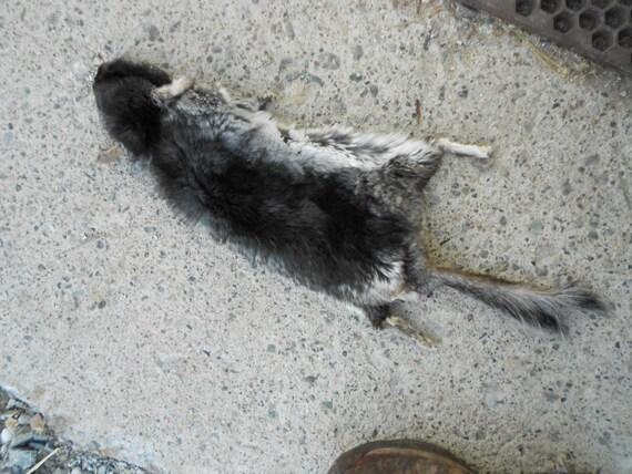 RESERVED For Sarah Cothren-  Dark Lifesize Chinchilla Fur Pelt Dry Tanned Lot No CHIN