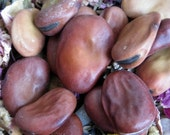 Rita's Mojo Beans - Hoodoo, Pagan, Magic - Good Luck Wishing Beans