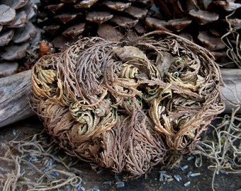 Rita's Rose of Jericho - Rebirth, New Growth, Blessings