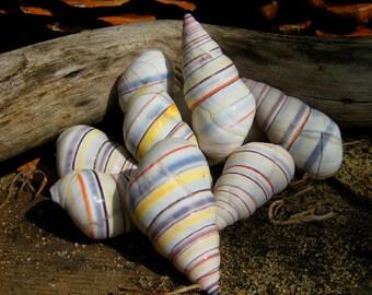 Rita's Hoodoo Rainbow Snail Shell - Pagan, Hoodoo, Witchcraft, Juju